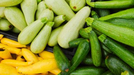 Выращивание кабачков, как выращивать и ухаживать, их особенности и полезные свойства кабачков
