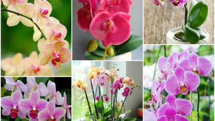 Выращивания орхидей в домашних условиях, виды орхидей их особенности