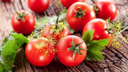 Выращивание помидор. Как и когда сажать, как поливать и ухаживать за помидорами. Болезни и лечение