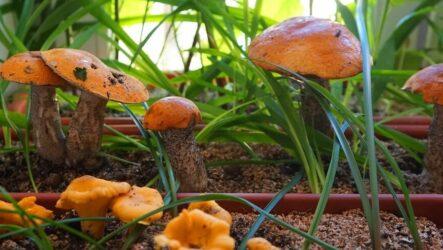 Как выращивать грибы в домашних условиях. Виды и их особенности, болезни, методы профилактики, цена.