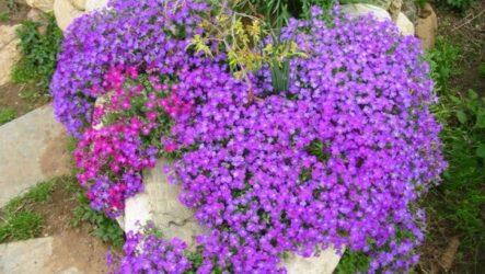 Почвопокровные многолетники для сада. 7 лучших видов