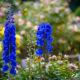 Топ — 7 цветов голубой окраски для сада