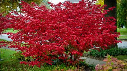 7 кустарников, которые украсят сад в осенний период