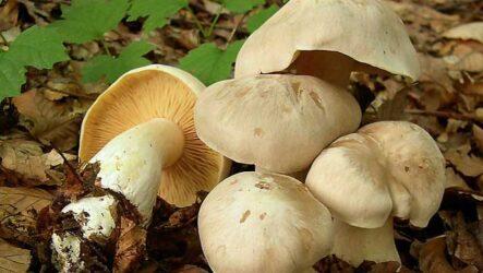 Топ-10 ядовитых грибов России