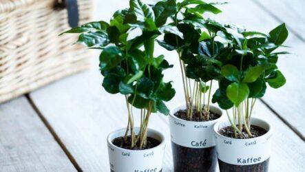 Топ — 10 комнатных растений с положительной энергетикой