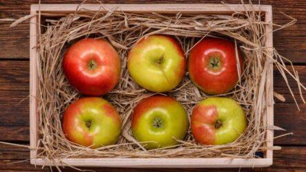 Как сохранить яблоки. 7 эффективных способов