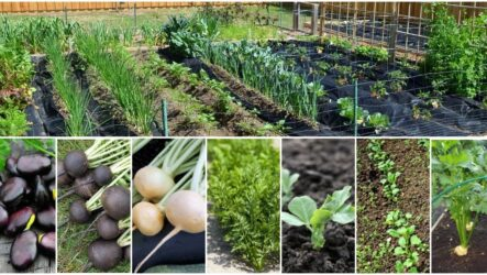 Что садить ранней весной на огороде. 10 овощей, которые садят ранней весной на огороде
