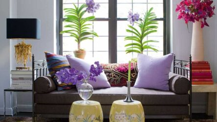 Топ — 7 растений для очищения воздуха в помещении