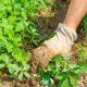 Борьба с сорняками на дачном участке. 5 действенных способов
